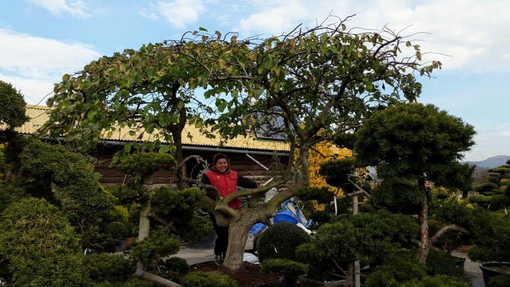 Veľké Stromy