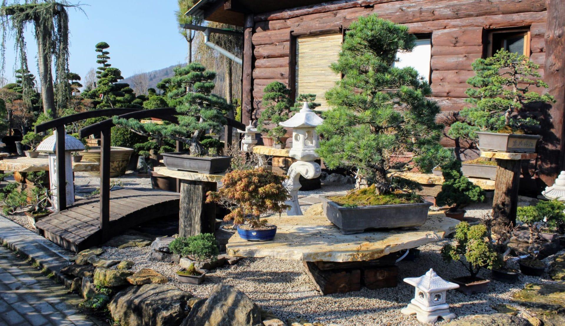 Japonské bonsaje