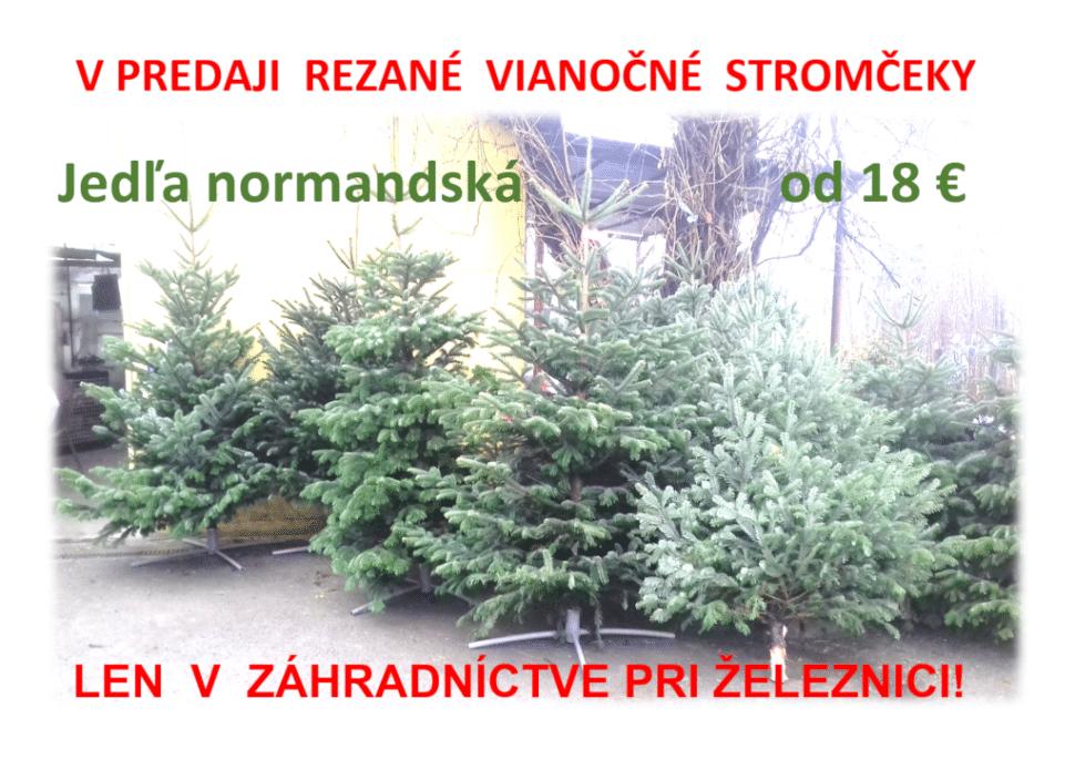 predaj vianočných stromčekov jedľa normandská