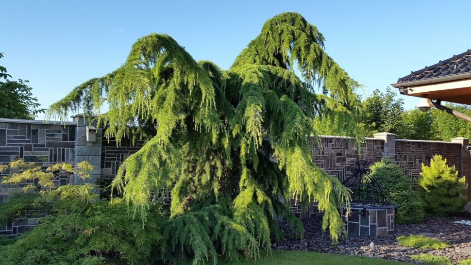 Záhrada Senec cypruštek
